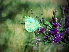 Thistle Butterfly by Mousenibbles