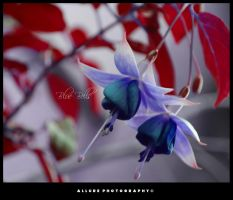 Blue Bells by Allure09