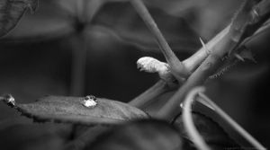 The world on a leaf... by Yohao88DG