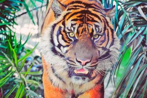 Tiger Painting by keillly