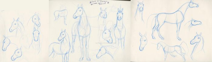 Horse studies - lookin for a unicorn by nekonotaishou