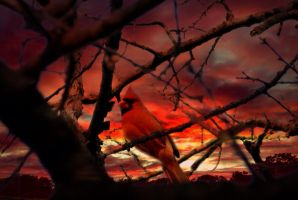 Red sky at night by Skitime123