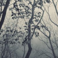 foggy forest by leenik
