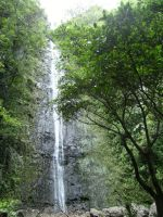 Manoa Falls by rioka