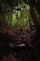 Forest by MartinaMatiss