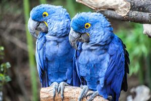 Blue Man Eaters by Bartonbo