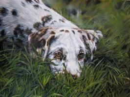 Dalmation Puppy by Katie-Z