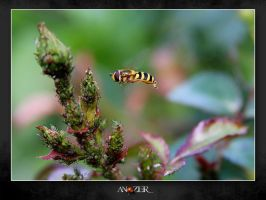 BEE ON AIR by ANOZER
