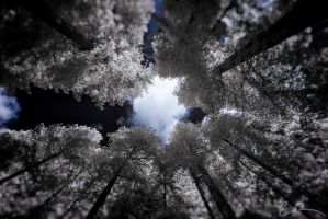 Window to the Heavens by eprowe