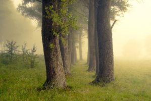 Misty morning IV by mannromann