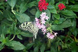 Butterfly and Flowers 2 by orasa