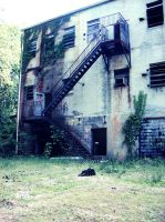 Abandoned Rubber Plant 008 by empyreus-stock