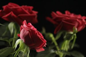 3 roses by drawingfloral