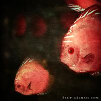 fishes by SylwiaS