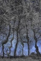 blue trees by LoveYourPath