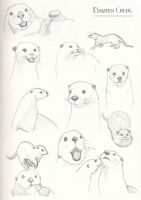Otters by kingmancheng