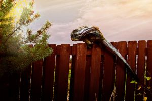 root of a tree on a fence by Luba-Lubov-13