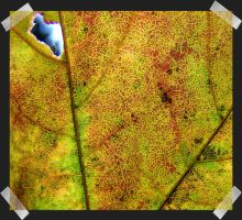 Autumn Stained Glass 1 by jgrockphotos