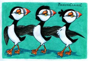 Puffins by MadinkaClaireC