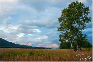 Aspens And Tetons by ThisWomanWanders
