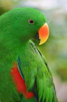 Green parrot by jeroenpaint