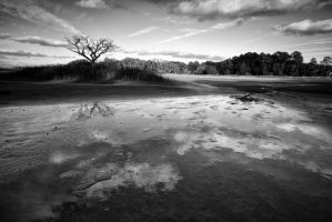 Pickney Reflections BW by Bawwomick