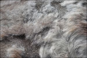 Horse Fur texture by FrankAndCarySTOCK