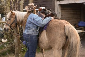 Grooming- Saddle up a Draft Horse 3 by LuDa-Stock