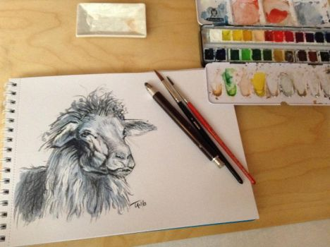 Quick Sketch Sardinian Sheep by popChar
