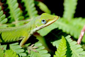 Fern Anole by FallOut99