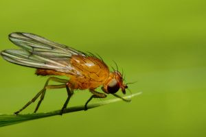 Fruit fly orange. by gmazza