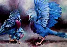 Victoria Crowned Pigeons (goura victoria) by veracauwenberghs