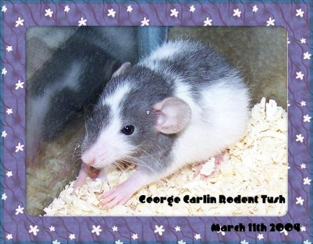 George Carlin Rodent Tush by wiccanwitchiepoo