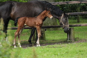 Escada and foal Stock 5 by Saerl