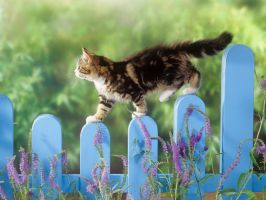 Walking on the Fence by LoliiTD