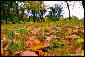 leaves fallen... by Iulian-dA-gallery