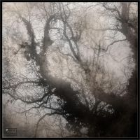 Fog I by Baron-of-Darkness