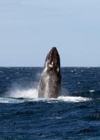 Whale Watching I by Squiddgee7734
