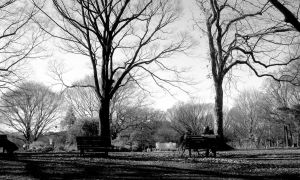 Bench upon bench by GoHomeThea
