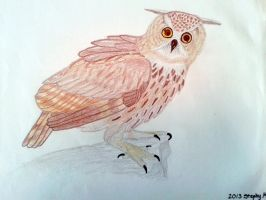 Owl by stephtastic14