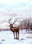 Sawsbuck in winter by Red-Moon-Pictures