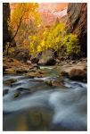 Cottonwoods in the Canyon by joerossbach