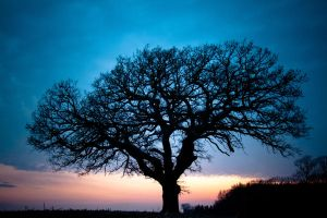 Grandfather Tree Sunset 1.5 by quasi-Virtuoso