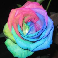 Rainbow Rose1 by superpower-pnut