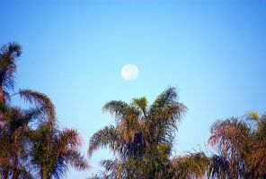 Moon and palm trees by ShannonCPhotography