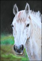 Drawing-Portrait of white horse by Ennete