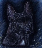 French bulldog by ZairaHusky