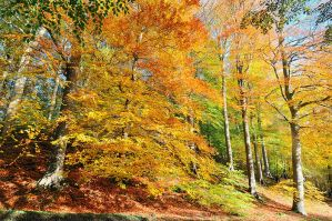 Autumn Trees at Minnowburn by Gerard1972