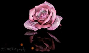 Solo Rose by CFTMPhotography