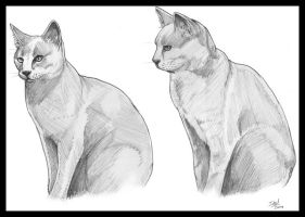 Pair of Cats by dedded